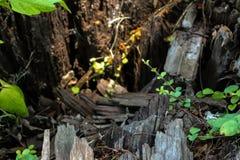 Slut upp till ett stupat träd Royaltyfri Foto