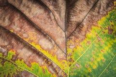 Slut upp trädtjänstledighettuxturen för bakgrund Royaltyfria Bilder