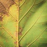 Slut upp trädtjänstledighettuxturen för bakgrund Arkivbild