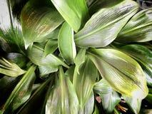 Slut upp tropisk bakgrund för textur för naturgräsplanblad Stil för färg för tappningsignalfilter Arkivbild