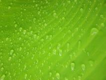Slut upp vattenliten droppe på bananbladet Royaltyfri Bild