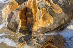 Slut upp visningdetaljen i en Moeraki stenblock royaltyfria foton