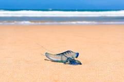 Slutet av blått buteljerar upp geléfisken med havbakgrund Arkivfoto