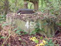 Slutet av den numrerade krigbunker låste upp den bästa skogen Arkivbilder