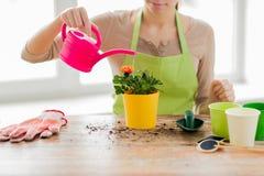 Slutet av kvinnan räcker upp att plantera rosor i kruka Fotografering för Bildbyråer