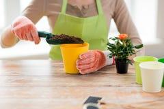 Slutet av kvinnan räcker upp att plantera rosor i kruka Arkivfoto