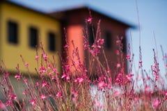 Slutet av löst torkar upp blommor på berget på bakgrund för blå himmel arkivfoto