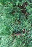 Slutet av litet sörjer upp trädet Royaltyfri Foto