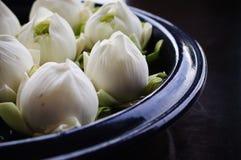 Slutet av lotusblomma dekorerar upp i vas Arkivbild