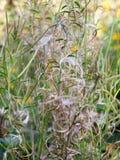 Slutet av nätta blommaspiral texturerar upp bakgrund Fotografering för Bildbyråer