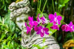 Slutet av orkidén blommar upp i den berömda Singapore botaniska trädgården Arkivfoto