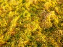 Slutet av solen tände upp för sommarvår för grönt gräs grou för vinter för höst Fotografering för Bildbyråer