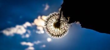 Slutet av sommar, en blomma mot himlen arkivfoton