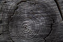 Slutet av treestammen ringer upp arkivbild