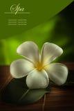Blommabaner Arkivbilder