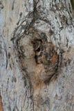 Slutet gnarl upp av träd Royaltyfri Fotografi