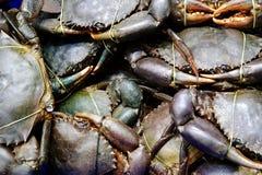 Slutet packade upp av den vid liv krabban för packen som var klar för försäljning till kunden fotografering för bildbyråer