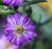 Slutet sköt upp av den härliga blommande blomman Royaltyfri Fotografi