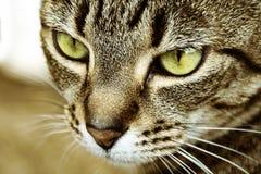 Slutet sköt upp av en detalj för kattframsidavisning royaltyfria foton