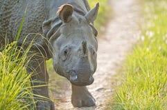 Slutet sköt upp av indisk noshörning Arkivbilder