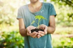 Slutet sköt upp av mörkhyad man i blå t-skjorta innehavväxt med gröna sidor i händer Trädgårdsmästaren visar utloppsröret det royaltyfri foto