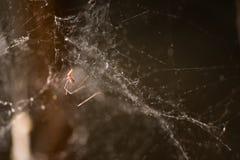 Slutet sköt upp av spiderweb Arkivfoton