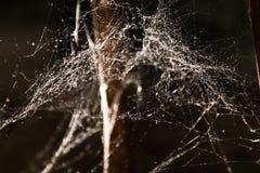 Slutet sköt upp av spiderweb Royaltyfri Bild