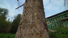 Slutet specificerar upp skället för trädstammen mjuk panorama från grunden som ska överträffas lager videofilmer