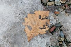 Slutet torkade upp det bruna bladet på stenjordning i Noboribetsu datumJIdaimura den historiska byn på Hokkaido, Japan Royaltyfria Bilder