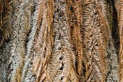 Slutet torkade upp sidor av palmträdet, abstrakt bakgrund för natur royaltyfria bilder