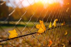 Slutet upp det metalliska netto-formade staketet från tråd med höstbladet stucked i det på en bakgrund av suddighetsstaden Fotografering för Bildbyråer