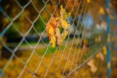 Slutet upp det metalliska netto-formade staketet från tråd med höstbladet stucked i det på en bakgrund av suddighetsstaden Royaltyfria Bilder