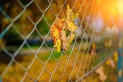 Slutet upp det metalliska netto-formade staketet från tråd med höstbladet stucked i det på en bakgrund av suddighetsstaden Arkivbild
