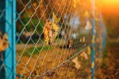 Slutet upp det metalliska netto-formade staketet från tråd med höstbladet stucked i det på en bakgrund av suddighetsstaden Royaltyfri Fotografi