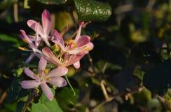 Slutet upp fotoet av en klunga av rosa färger blommar på parkera under sen sommar Fotografering för Bildbyråer