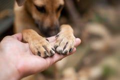 Slutet upp handen för man` s är hållande på till foten för hund` s Arkivfoto