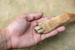 Slutet upp handen för man` s är hållande på till foten för hund` s Fotografering för Bildbyråer