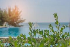 Slutet upp treetop sidorna av den gröna busken med simbassängen och seascape beskådar i bakgrunden fotografering för bildbyråer