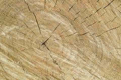 Slutframsidan av ett träd med sprickor och årliga cirklar, textur av trä av en framsidadel royaltyfria bilder