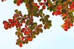 Färga av leafen Fotografering för Bildbyråer