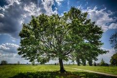 Sluttade Mapletree på det Tempelhofer fältet i vår Royaltyfria Foton