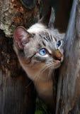 Sly cat Royalty Free Stock Photos