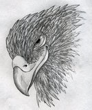 Sly eagle. Portrait. Beak looks like if the eagle was smiling. Pencil drawing, sketch Stock Photo