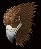 Sly eagle. Portrait. Beak looks like if the eagle was smiling. Digital drawing Stock Photo