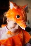 Sly fox Royalty Free Stock Photo