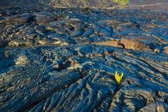 Smält kyld lava arkivfoton