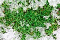 Smältande is på gräs royaltyfri foto