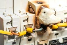 Smältning och skada av asken för elektrisk säkring eller säkerhetsbrytaren på grund av Overcurrentmakt royaltyfri fotografi