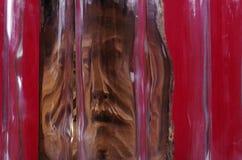 Smärta av ett bränt träd Arkivfoto
