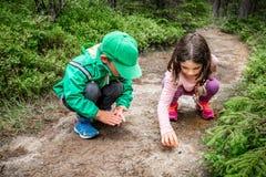 Små barn pojke och flicka som sitter på skogjordning som undersöker och lär om naturen och kryp Se ett svart fel arkivfoto
